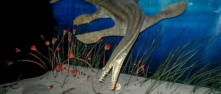 Nothosaurier © Urweltmuseum