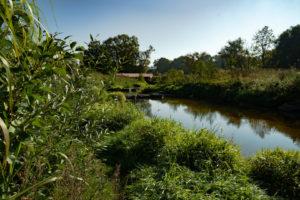 Wilhelminenaue Flussbett