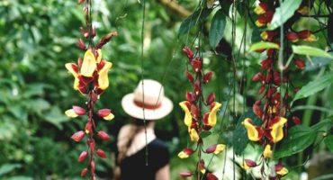 (c) Lilies Diary
