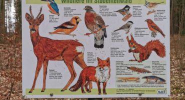 Wander-Geheimtipp: Studentenwald