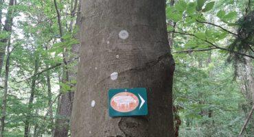 Wander-Geheimtipp: Walderlebnispfad und Waldhütte