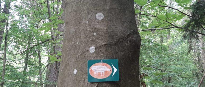 Wegweiser Walderlebnispfad